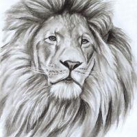 Löwe 2 Kohlezeichnung