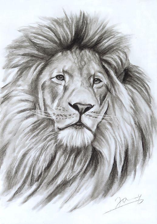 Löwe Kohlezeichnung Kunst Malerei Zeichnung