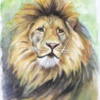 Löwe (6)
