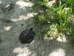 zapatillas islands - turtle