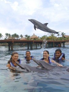 The 60-minute Delphinus Primax Experience at Xcaret Park in Playa del Carmen