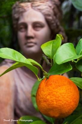 Orange and the Lady