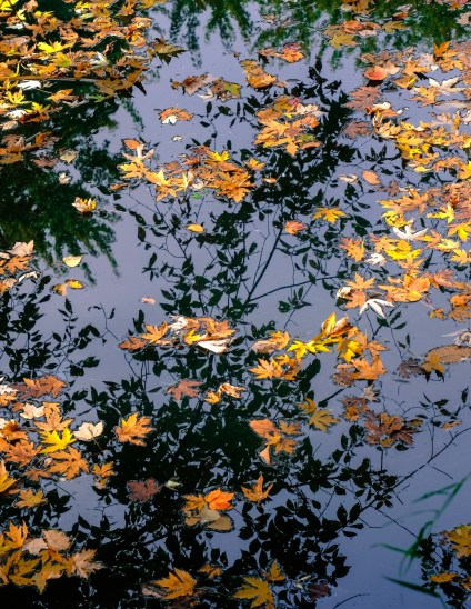 Tranquil Reflections