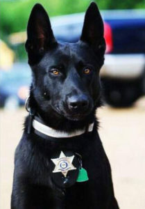 Rex looks a bit like real-life hero dog Lucas, who in 2015 saved his partner, Deputy Todd Frazier, after Frazier was ambushed by three assailants.