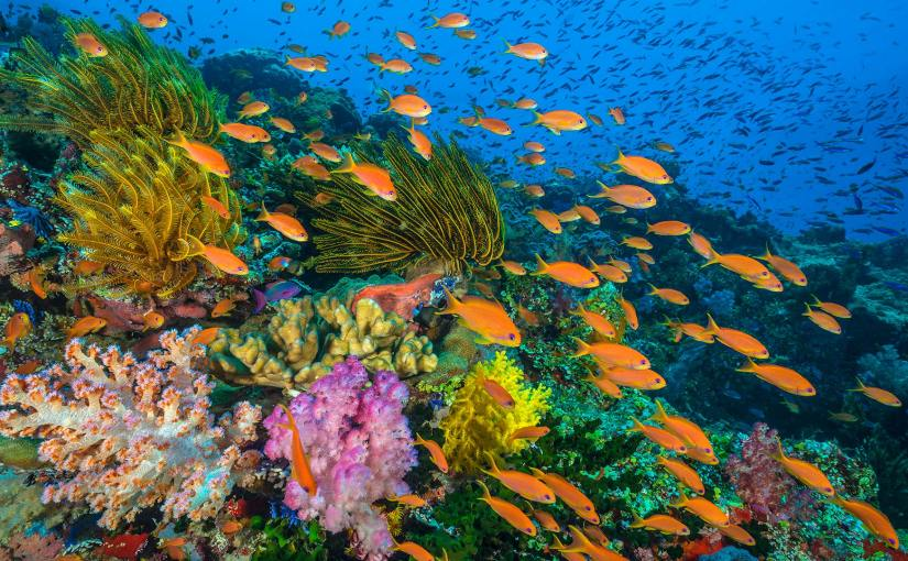 Ailing coral reefs matter