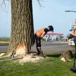 Bomenkap Midwolda
