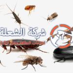 شركة مكافحة حشرات بالدمام اتصل الان 0530242929