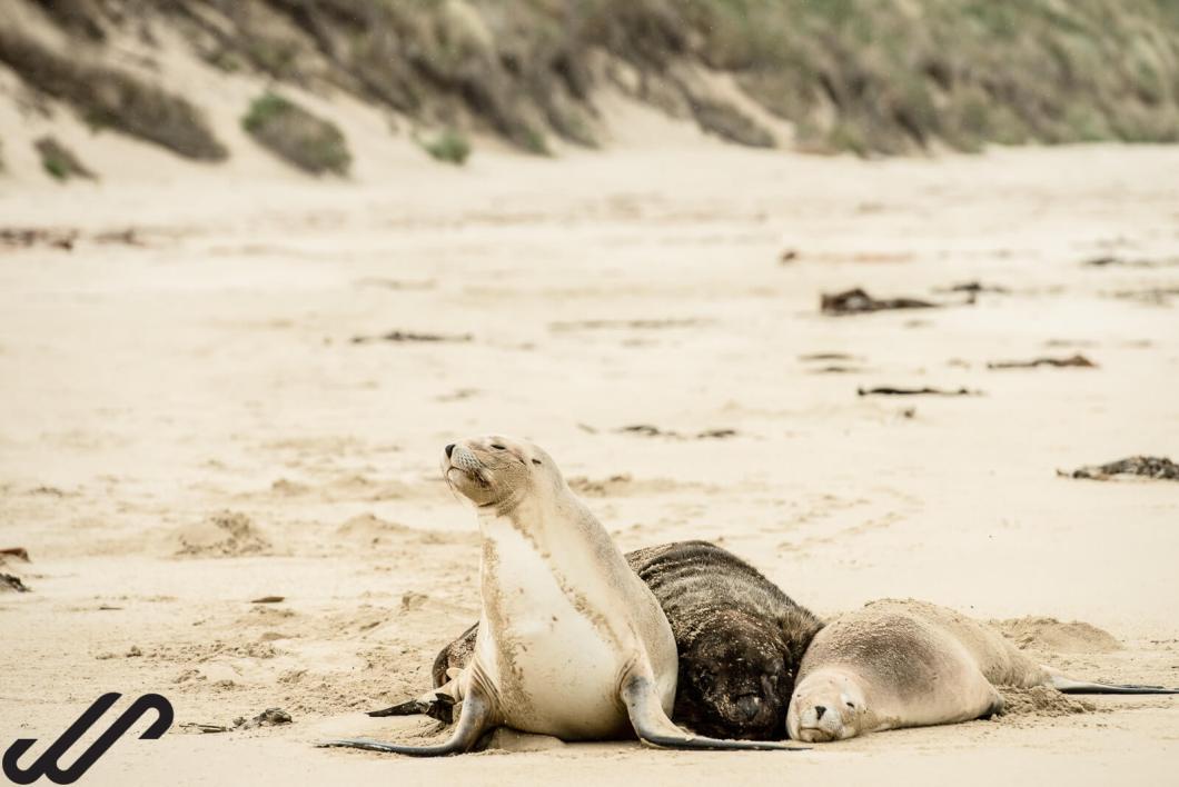 Wildlife spotten in Nieuw Zeeland