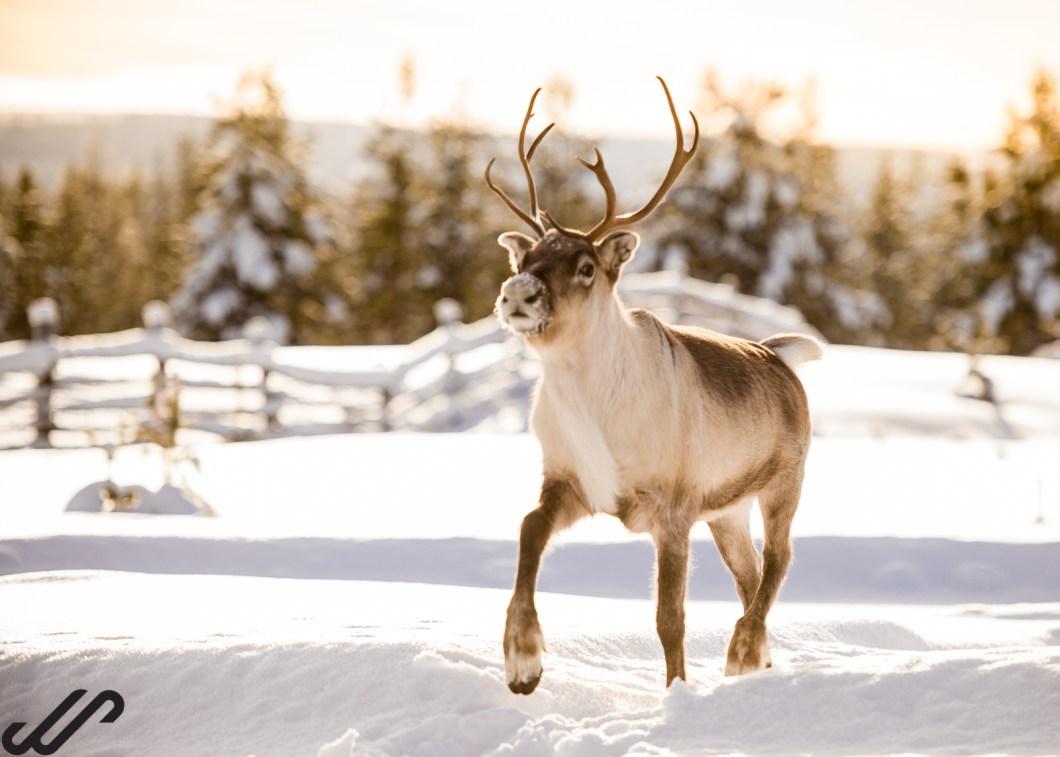 Tips voor het fotograferen in de sneeuw