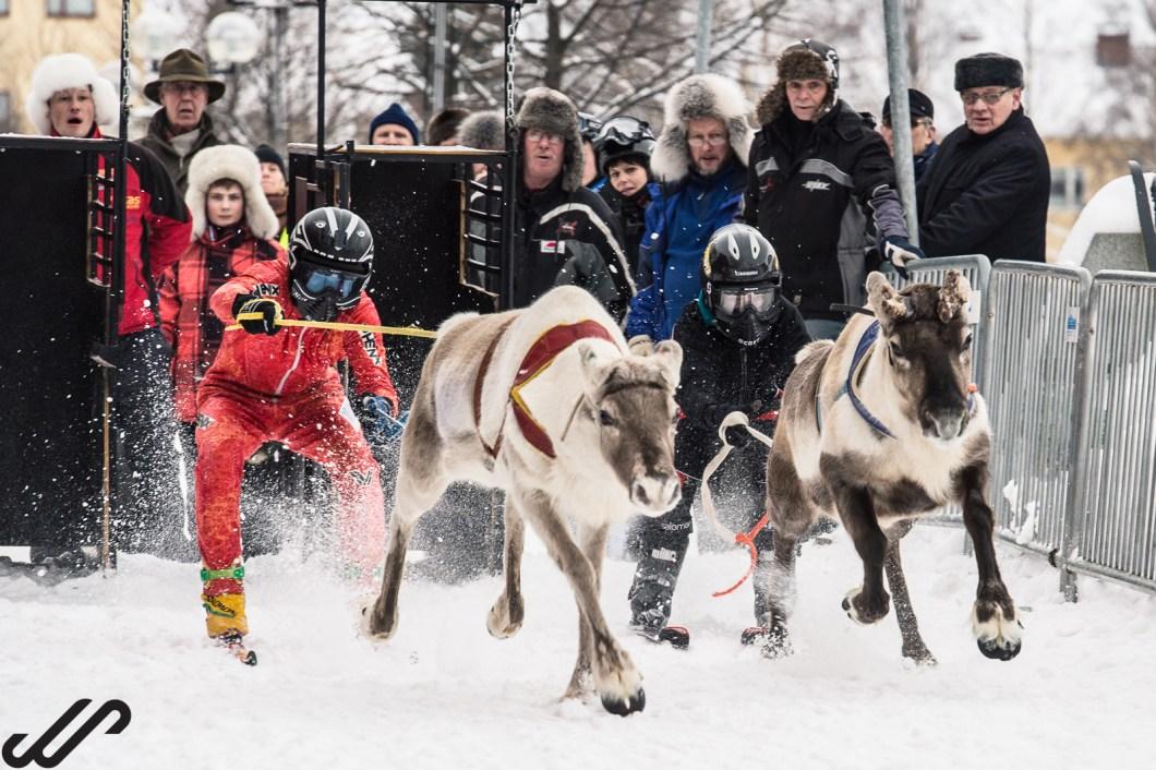 Fotograferen in de sneeuw, rendieren in Finland