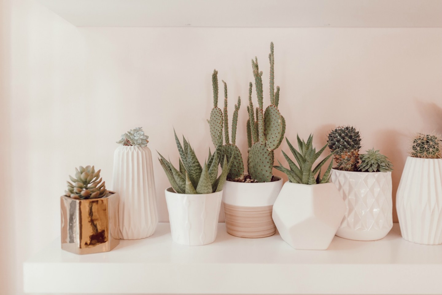 Cactus collection on JanuaryHart.com