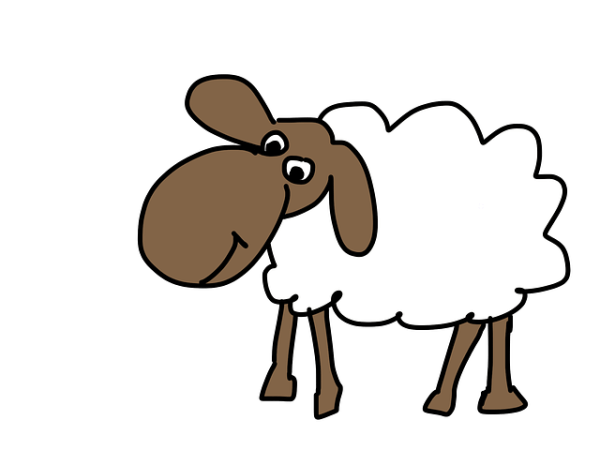 sheep-183057_640