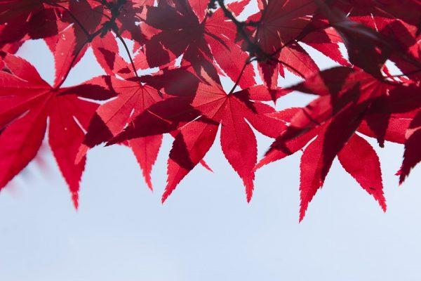 leaves-1193378_960_720