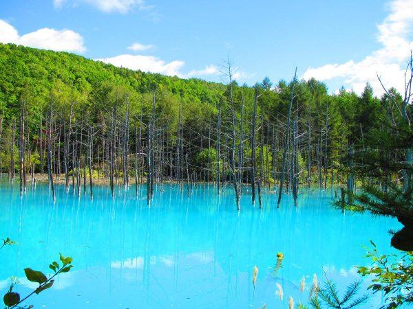 美瑛の白金青い池