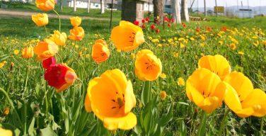 花のある風景