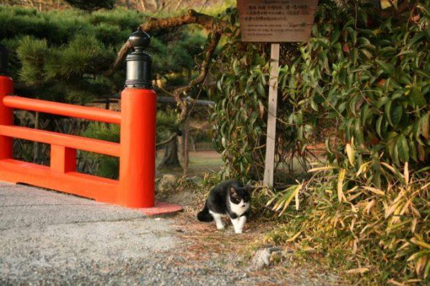 栗林公園の猫