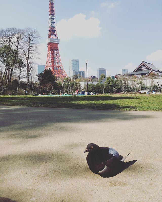 #tokyo #bird #pigeon #japan - from Instagram