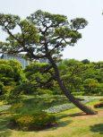 Japonski vrt.