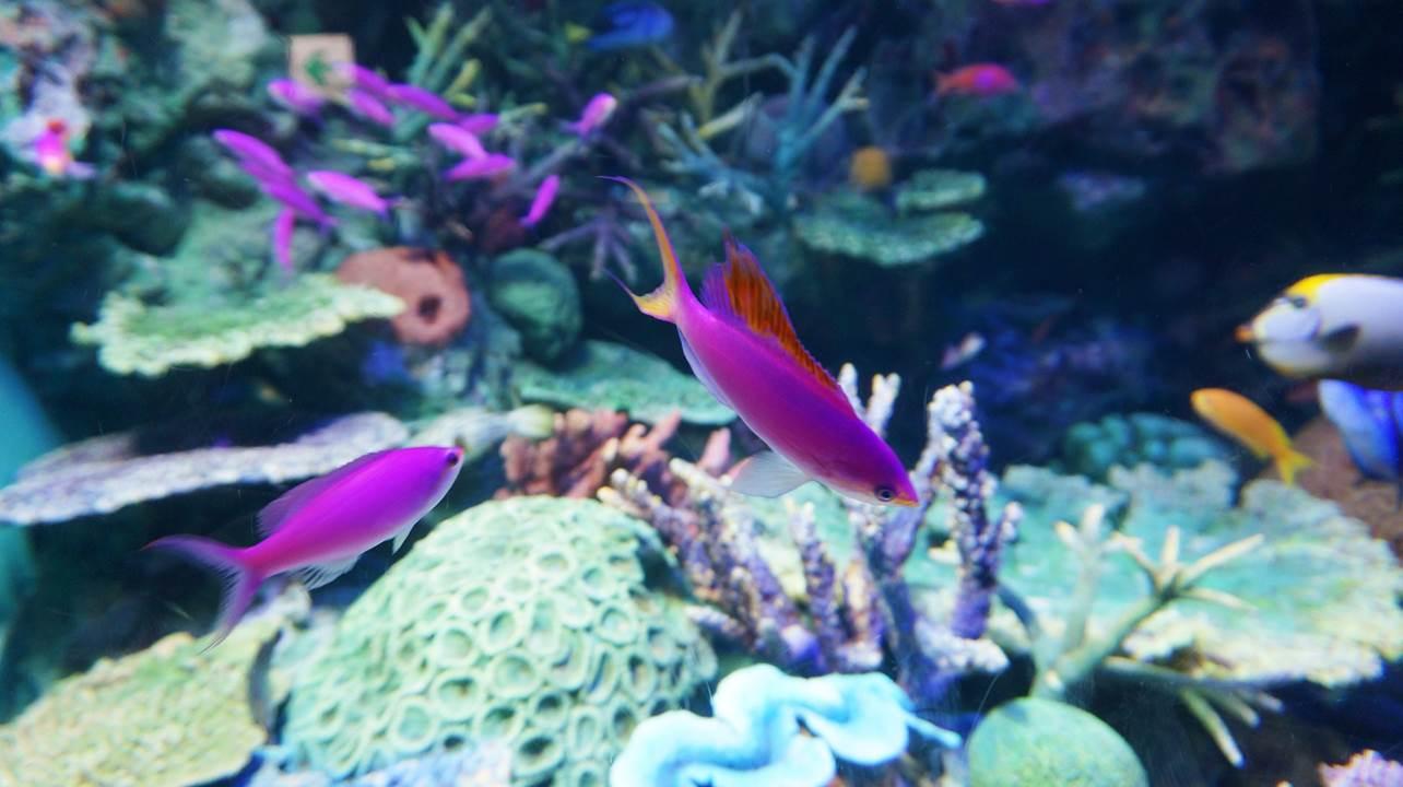 サンシャイン水族館 sunshine aquarium
