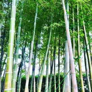 東京の穴場スポット 隠れた竹林 洗足池妙福寺