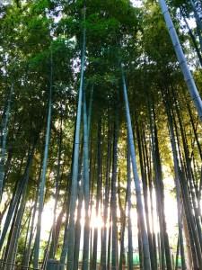 東京の小京都 竹林 穴場スポット 雀のお宿緑地公園