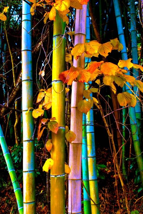 Bamboo Morning