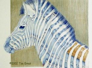 Levi Zebra