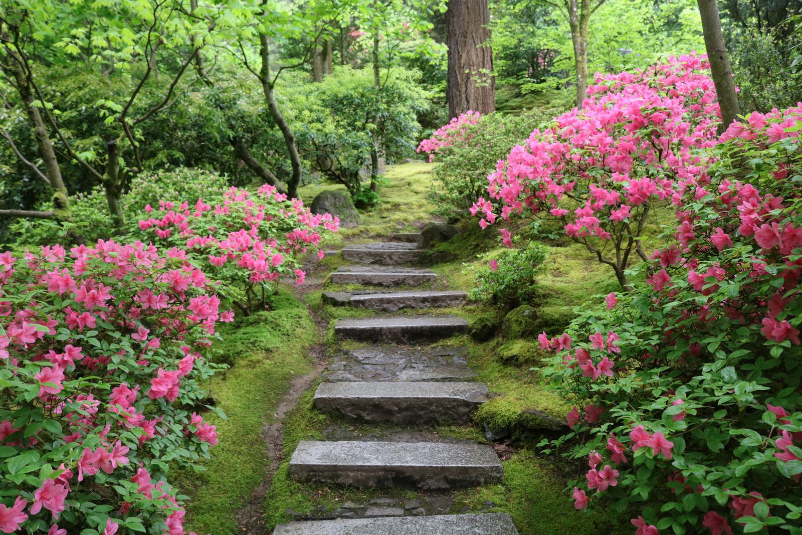 A Walk Through The Natural Garden