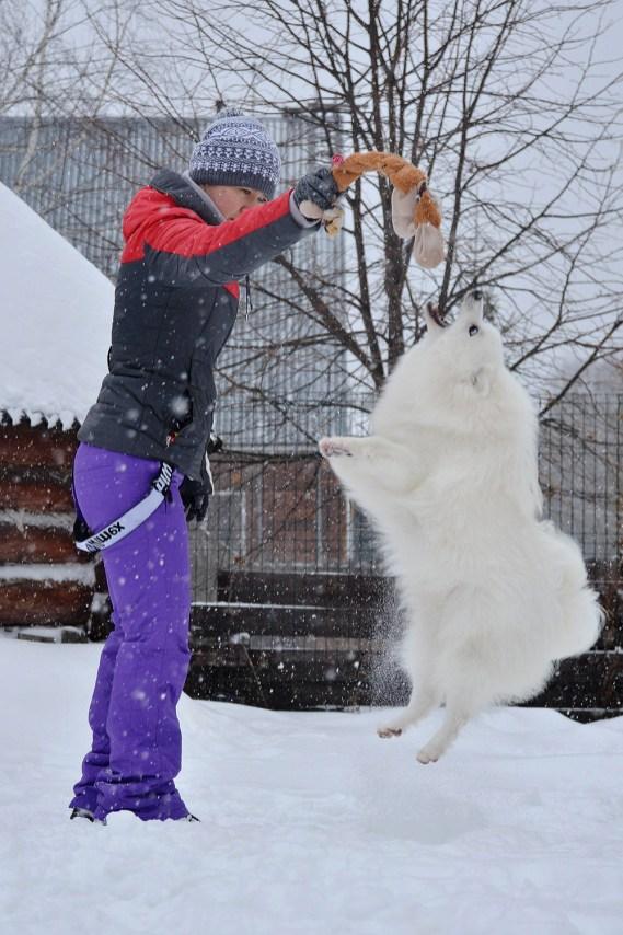 japanese spitz Baltik Lain Quest from Heart to Heart (Yeti) photo