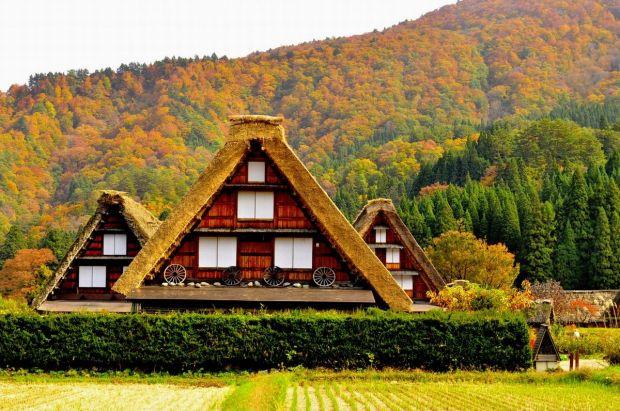 日本中部推薦賞楓景點 | 女遊日記
