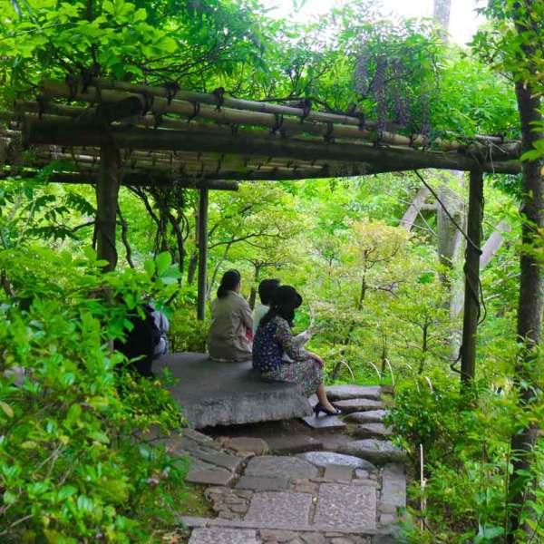 Japanese Iris, Kakitsubata is at Full Bloom at Nezu Museum's Garden in Tokyo  Nezu Museum | Travel to Japan from Canada