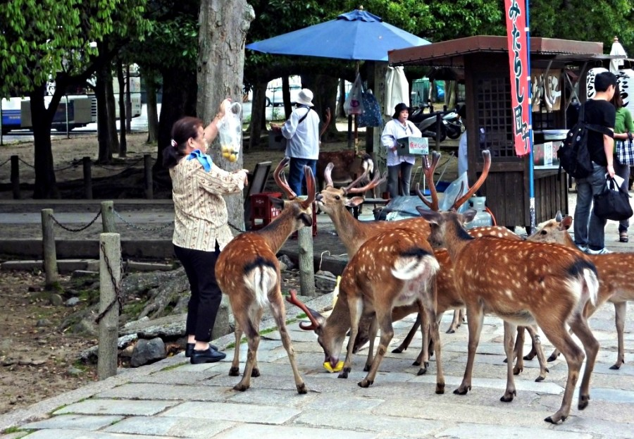 People_feeding_the_deer_in_Nara