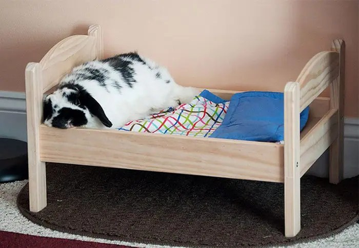 Bed for Bunnies