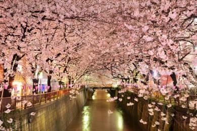 撮影し始めたら川沿いの提灯が消灯してしましました(笑) — at 目黒川. by tatsuo shigeno