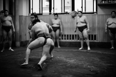 ALF_8440_sumo-small