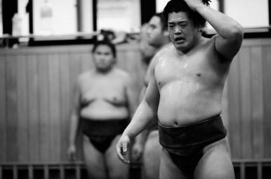 ALF_8460_sumo-small