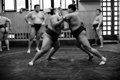 ALF_8558_sumo-small