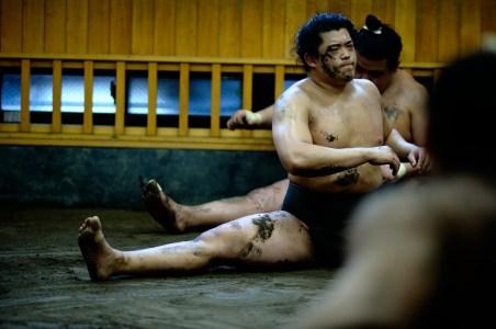 ALF_8756_sumo-small