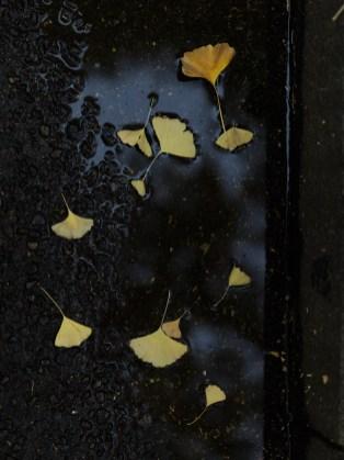 AG-autumn2017-small_9339394