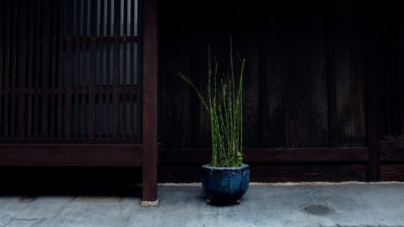 kyoto-8thMarch2018_DSF4761