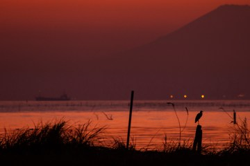 Mount Fuji and heron visible at sunset from Kisarazu, Chiba