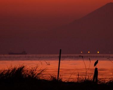 Mount Fuji and heron visible at sunset from Kisarazu, Chiba
