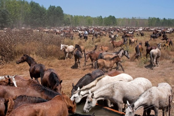 That's a lot of horses...