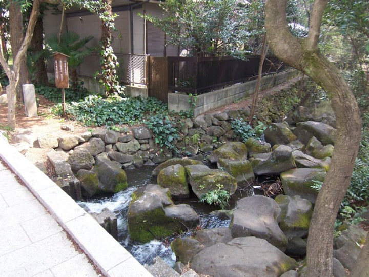From its spring in Inokashira Park, the Kanda river begins its exit from the well.  Ganbare, Kanda-chan!