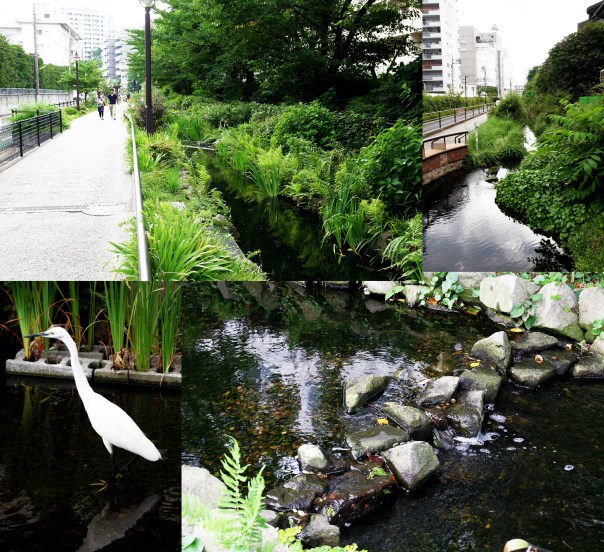 Water breathes life into the city. It's so important to have green spaces like the Midori Michi.
