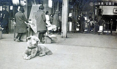 Hachiko just waiting for food in front of Shibuya Station