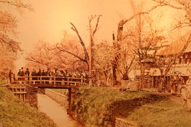koganei hanami meji period.jpg