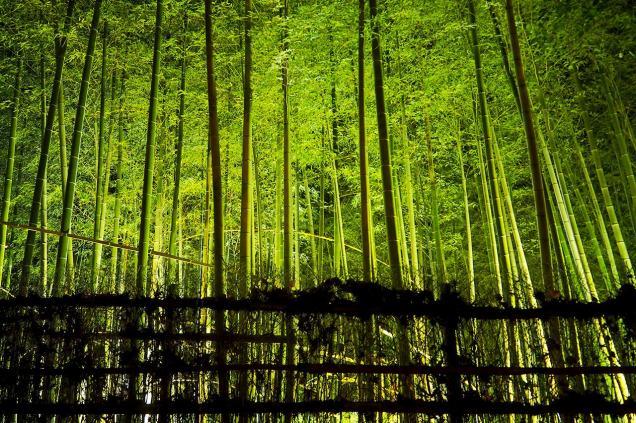 shirotori-garden-lightup-16