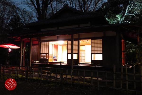 Weeping cherry tree (Shidarezakura) in Rikugien illumination attracts many people.0016