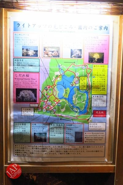 Weeping cherry tree (Shidarezakura) in Rikugien illumination attracts many people.0028